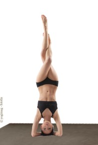 young yoga female doing yogatic exericise